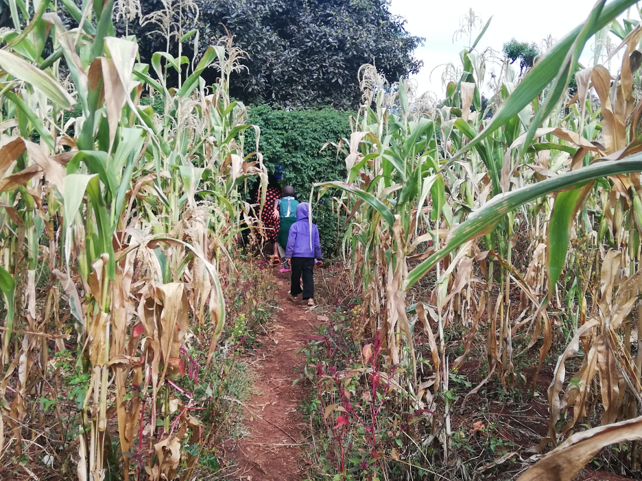 Children walking through corn stalks in rural Kenya.